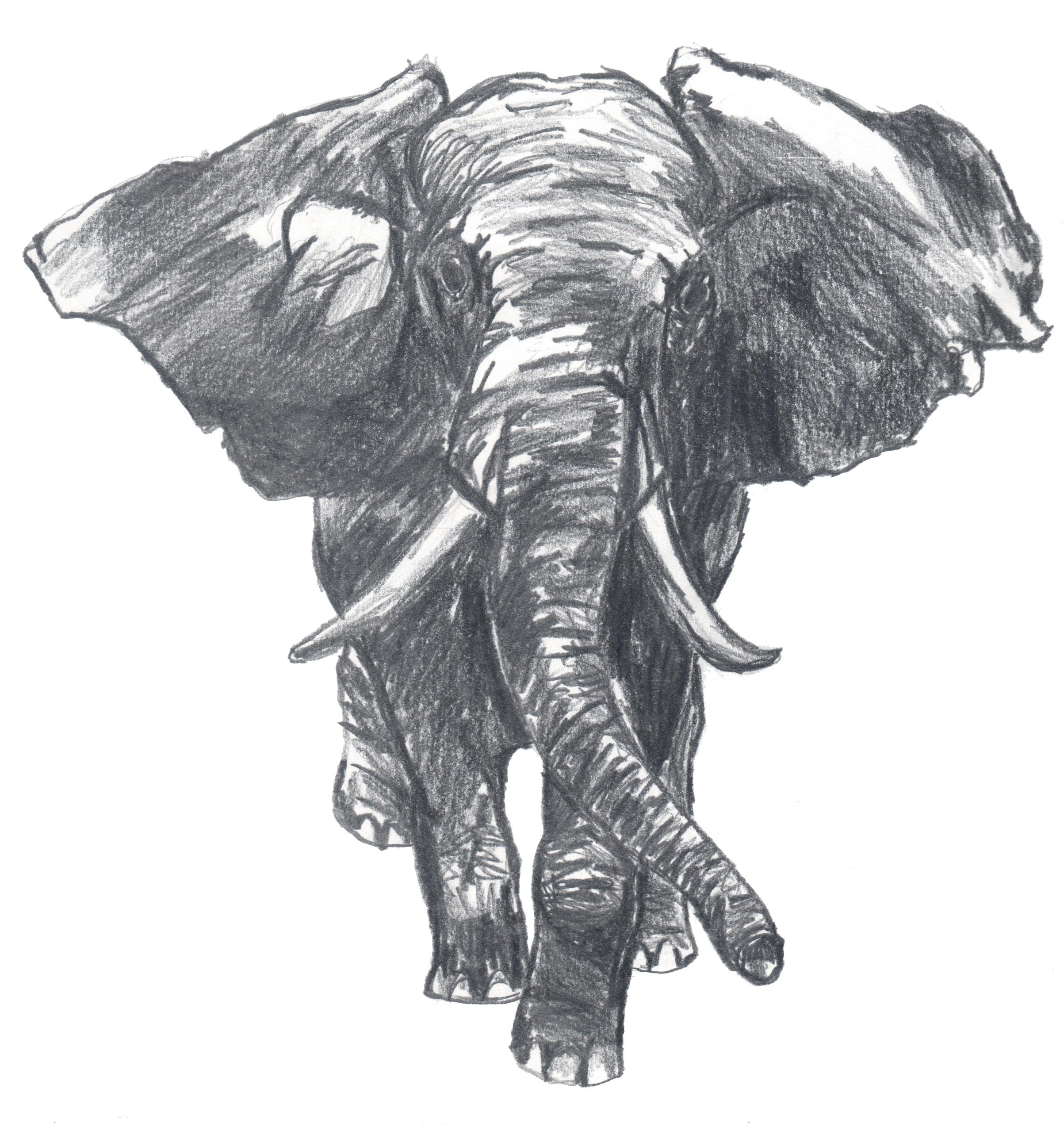 elefante Árvores olhos e estrelas